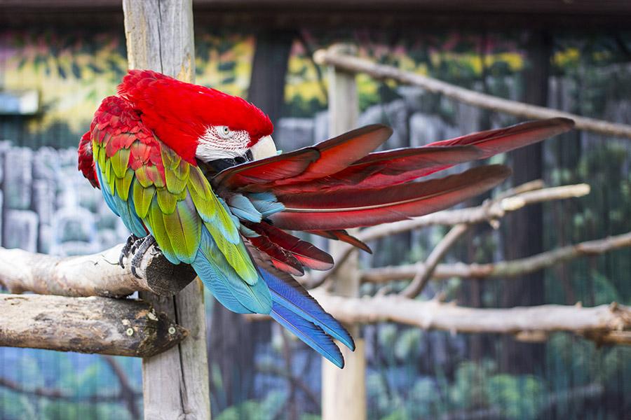 Zoo Blog 1
