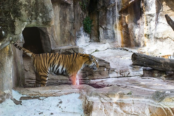 Zoo Blog 2