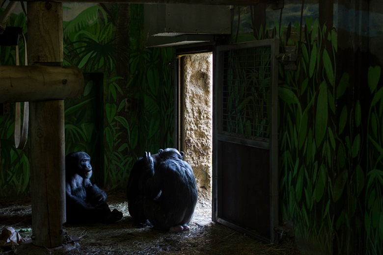 Zoo Blog 4