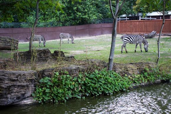 Zoo Blog 5