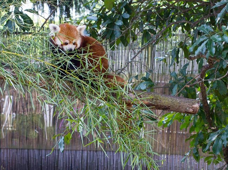 Zoo Blog 7
